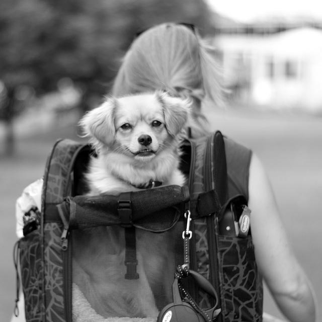mejor-mochila-para-mascota