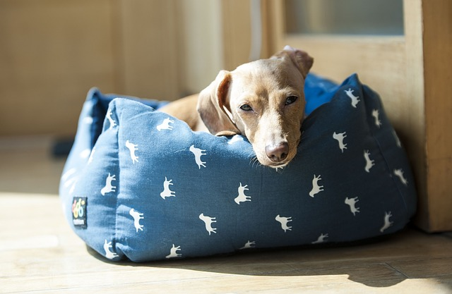 mejor-cama-para-mascotas