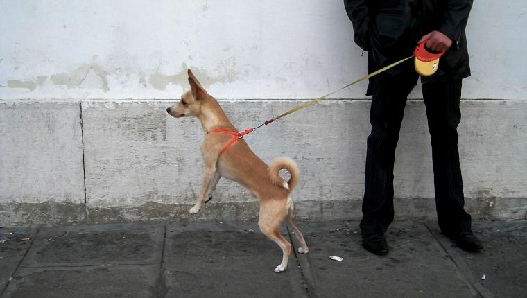 mejor-correa-extensible-para-perros