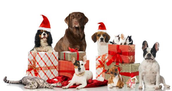 mejor-regalos-de-navidad-perfectos-para-mascotas