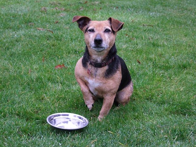 mejor-comida-de-perro