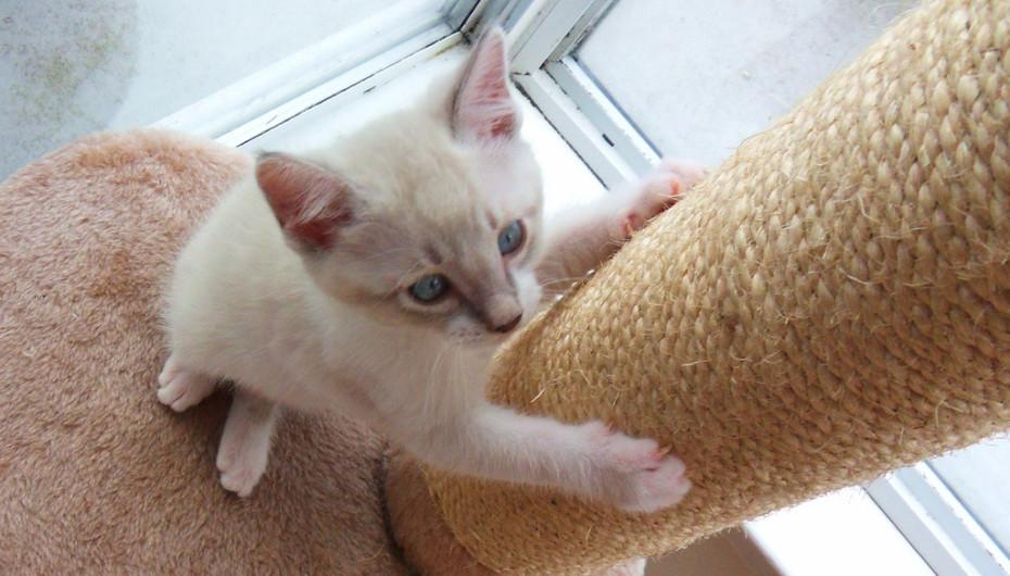mejor-rascador-para-gatos