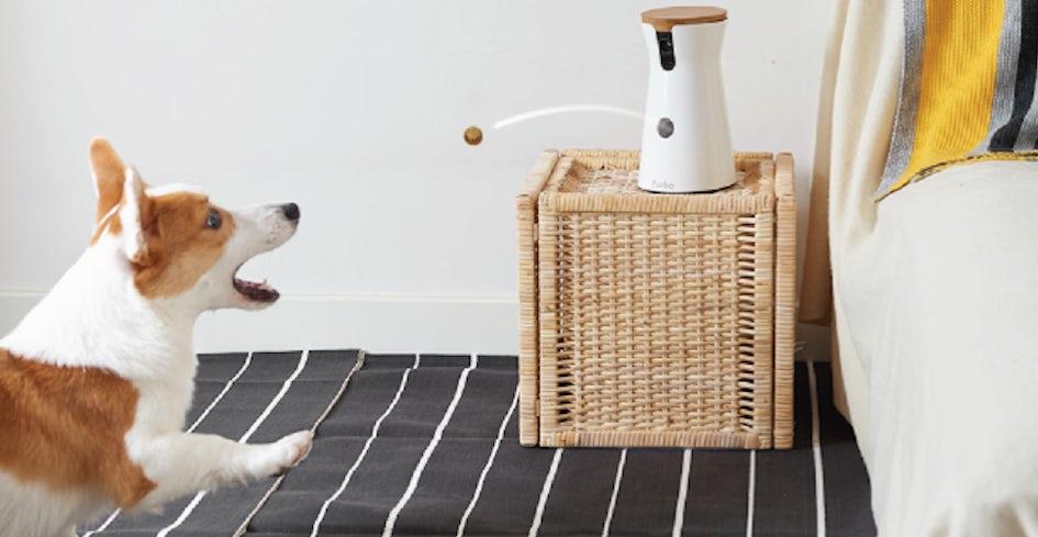 mejor-cámara-de-vigilancia-interactiva-para-mascotas
