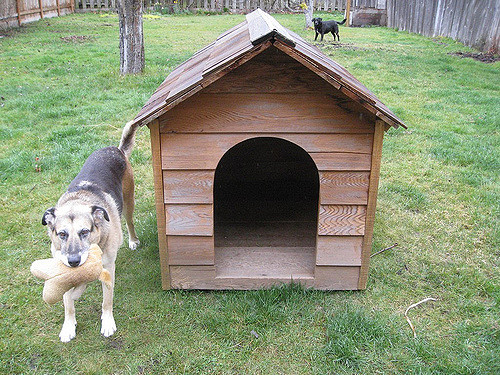 mejor-caseta-para-perros