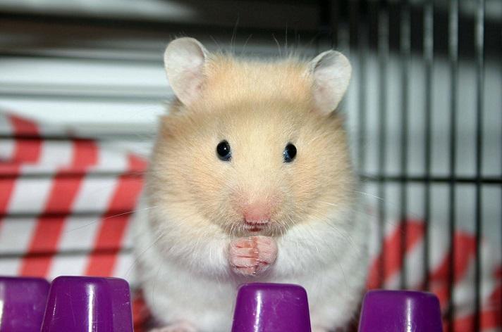 mejor-jaula-para-hamster