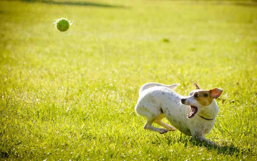 mejor-lanzador-de-pelota-automático-para-perros