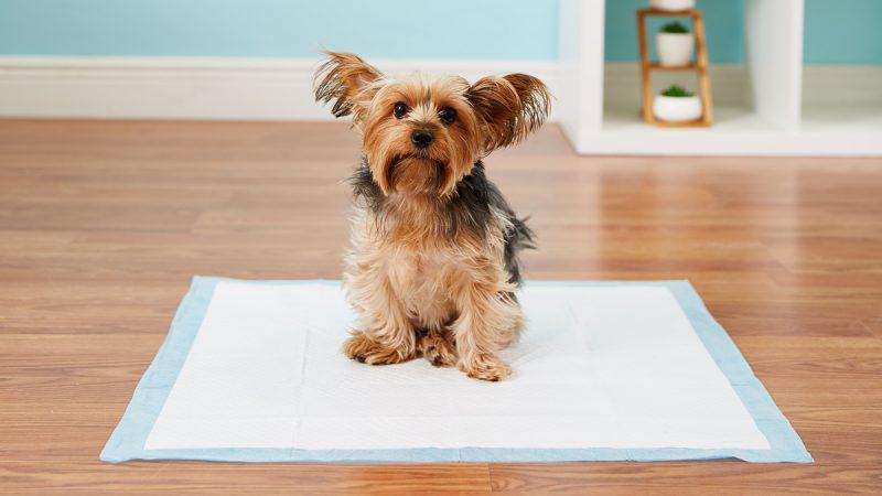 mejor-alfombra-educadora-para-perros