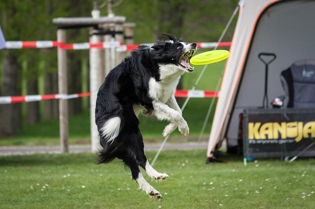 Disco volador luminoso Frisbee Perro Resistente Juguete para Perros Disco Silicona Plegable Volador Perros Piscina Jard/ín de Mascotas al Aire Libre Small Juguetes para perros