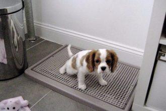 mejor-soporte-de-almohadilla-para-entrenamiento-de-mascotas