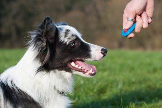 mejor-suministro-de-adiestramiento-para-perros