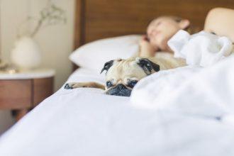 mejor-alfombra-refrigerante-para-perros