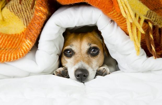 mejor-cama-para-mascotas-con-calefacción