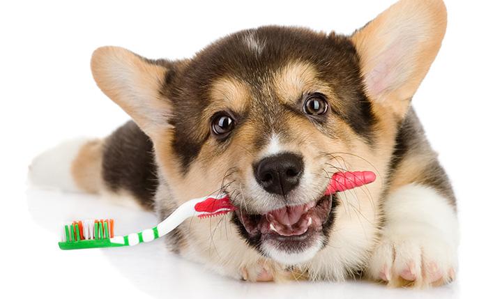 mejor-cepillo-de-dientes-para-perros