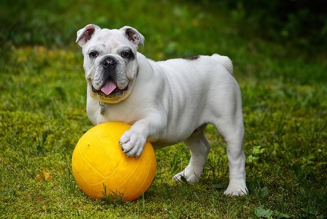 mejor-pelota-de-juguete-para-perros