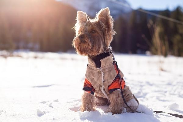 mejor-abrigo-de-invierno-para-perros