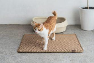 mejor-alfombra-para-gatos