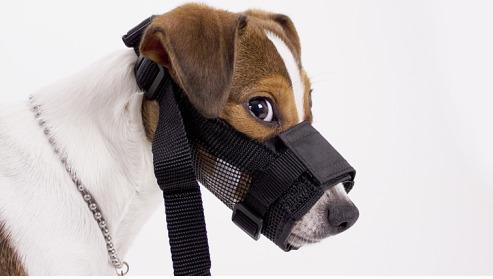 mejor-bozal-para-perro