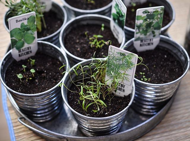 mejor-kit-de-cultivo-interior