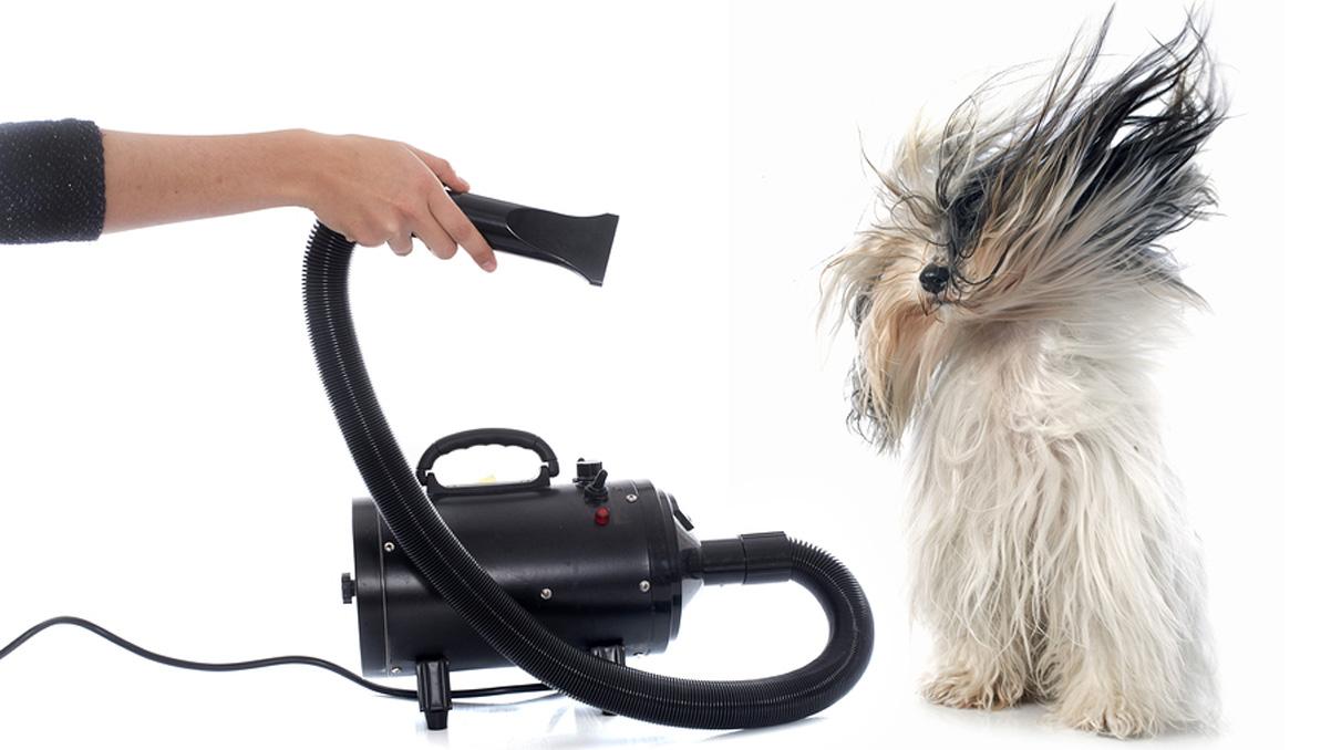 mejor-secador-de-pelo-para-mascotas