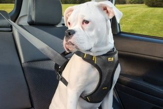 mejor-arnes-de-seguridad-de-coche-para-perros