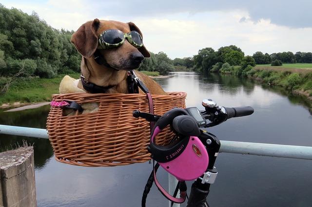 mejor-canasta-para-bicicleta-para-mascotas