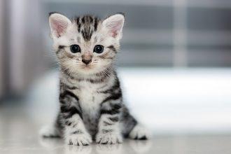 mejor-lechos-para-gatos