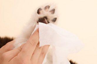 mejor-toallita-humeda-para-perros