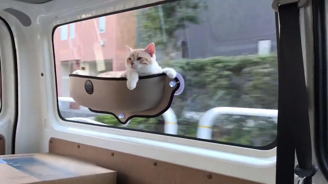 mejor-estante-para-gato