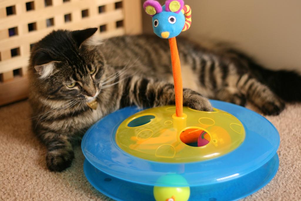 mejor-juguete-interactivo-para-gatos