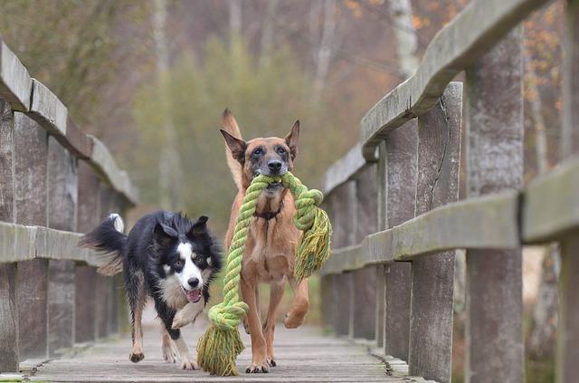 mejor-juguete-interactivo-para-perros