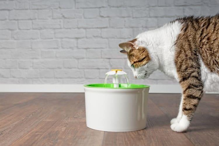 mejor-fuente-para-mascotas