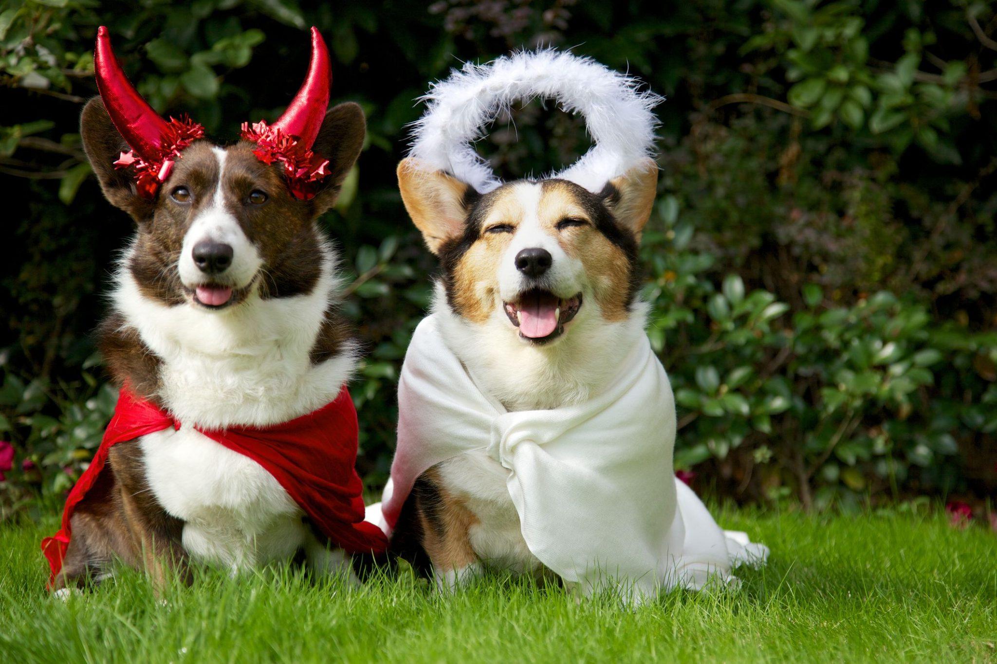 mejor-disfraz-para-perros