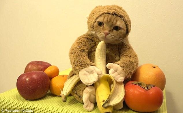 mejor-disfraz-para-gatos