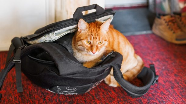 mochila-para-gatos