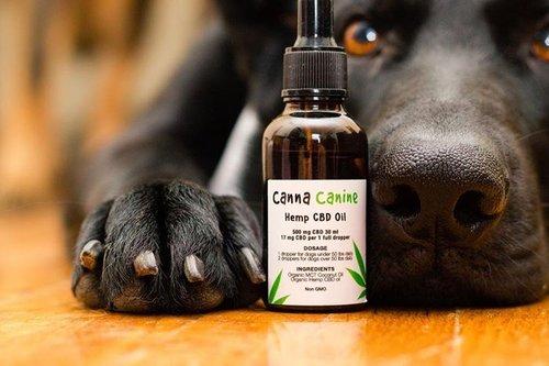 mejor-aceite-CBD-para-mascotas