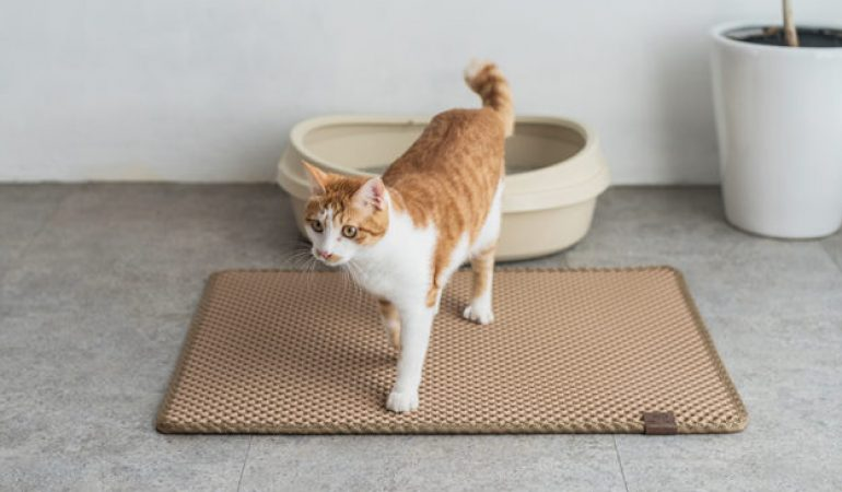 Las 5 mejores alfombras para gatos baratas 2018 ofertas y for Ahuyentar los gatos del jardin